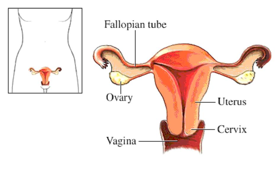 Über Gebärmutterentfernung